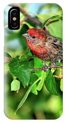 House Finch Phone Cases
