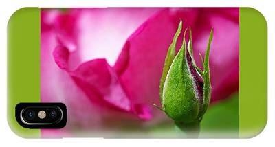IPhone Case featuring the photograph Budding Rose by Rona Black