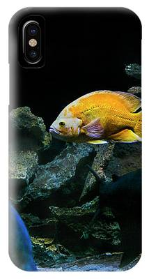 Yellow Fish In Tank IPhone Case by Richard J Thompson