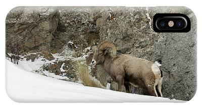 IPhone Case featuring the photograph Bighorn by Ronnie and Frances Howard