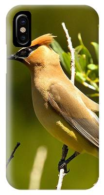 Cedar Waxing Phone Cases