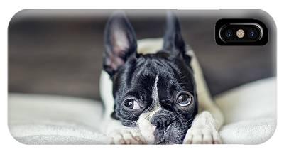 Boston Terrier Photographs iPhone X Cases