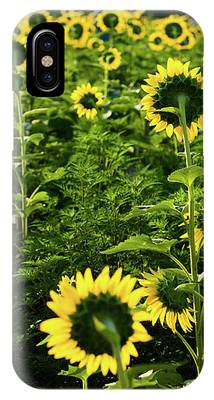 A Flock Of Blooming Sunflowers IPhone Case by Dennis Dame