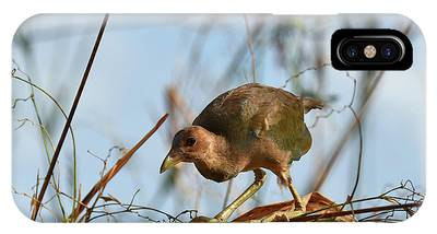 IPhone Case featuring the photograph Adolescent Purple Gallinule by Sally Sperry