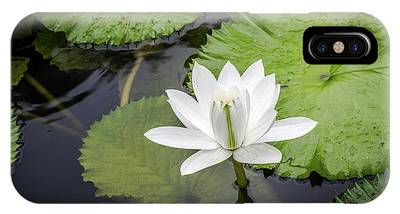 Another Lily IPhone Case
