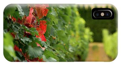 Autumn Comes To The Vineyard IPhone Case