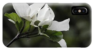 Beautiful Dogwood IPhone Case