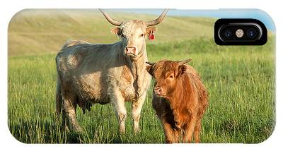 Cattle iPhone Cases