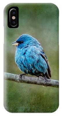 Bird In Blue Indigo Bunting Ginkelmier Inspired IPhone Case
