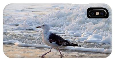 Black-backed Gull IPhone Case