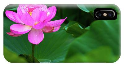 IPhone Case featuring the photograph Blooming Pink Lotus Lily by Dennis Dame