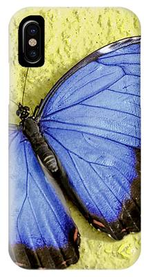Blue Morpho Butterfly IPhone Case by Richard J Thompson