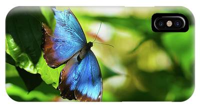 IPhone Case featuring the photograph Blue Morpho Butterfly by Sally Sperry