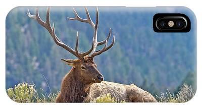 Bull Elk Resting IPhone Case