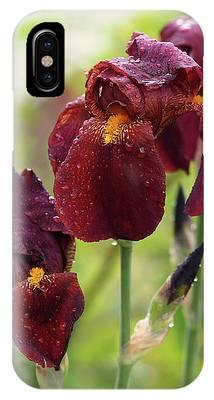 Burgundy Bearded Irises In The Rain IPhone Case by Rona Black