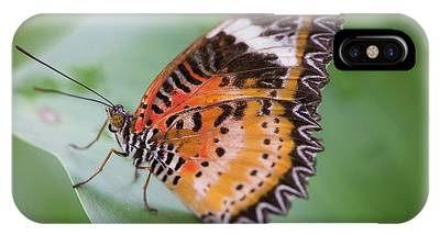 Butterfly On The Edge Of Leaf IPhone Case