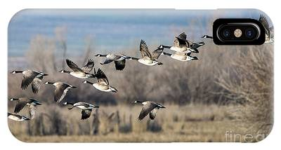 Canadian Goose Phone Cases