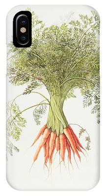 Carrot iPhone Cases