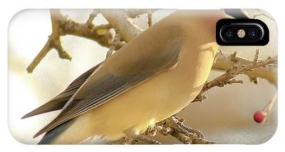 Cedar Waxing iPhone Cases