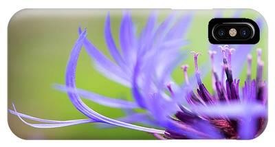 Centaurea Montana iPhone Cases