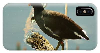 IPhone Case featuring the pyrography Common Moor Hen by Sally Sperry