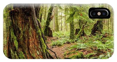 Comox Valley Forrest-3 IPhone Case