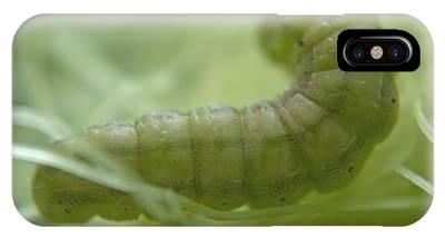 Corn Earworm Phone Cases