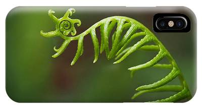 IPhone Case featuring the photograph Delicate Fern Frond Spiral by Rona Black