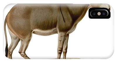 Donkey Phone Cases