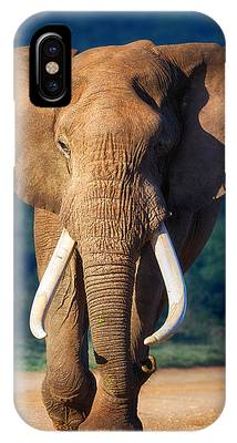 Ivory iPhone Cases