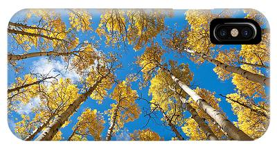 Fall Colored Aspens In The Inner Basin IPhone Case