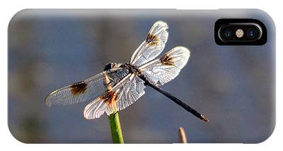 IPhone Case featuring the pyrography Four Spotted Pennant On A Reed by Sally Sperry