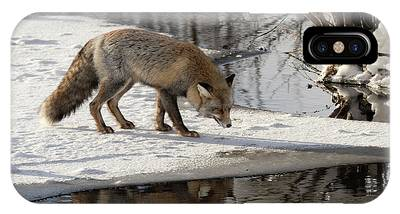 IPhone Case featuring the photograph Fox Reflection by Ronnie and Frances Howard