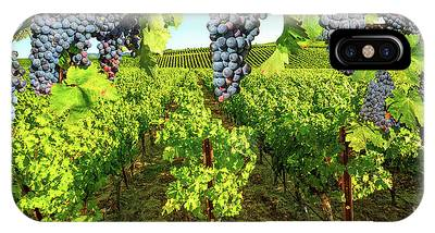 IPhone Case featuring the photograph Grape Plantation Napa Valley by Benny Marty