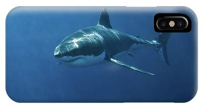 Nurse Shark Phone Cases