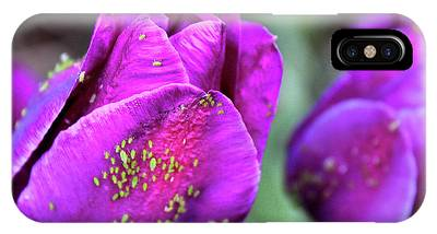 Aphids On Purple Tulips IPhone Case