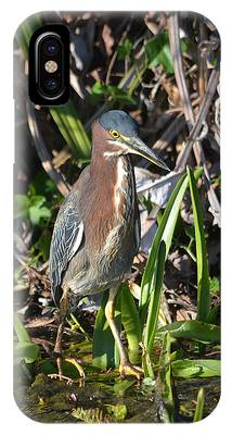 IPhone Case featuring the pyrography Green Heron Everglades by Sally Sperry