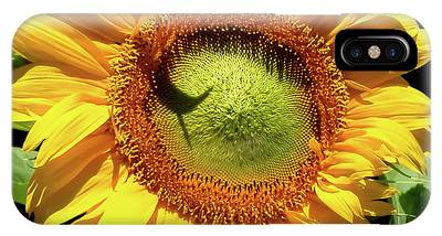 IPhone Case featuring the photograph Greenburst Sunflower by Rona Black