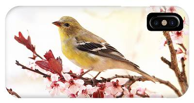 Happy Goldfinch IPhone Case