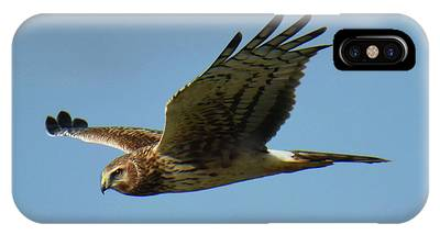 IPhone Case featuring the photograph Harrier In Flight by Sally Sperry