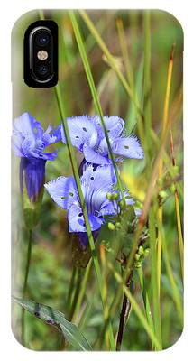 IPhone Case featuring the photograph Holy Blue Gentian by Sally Sperry