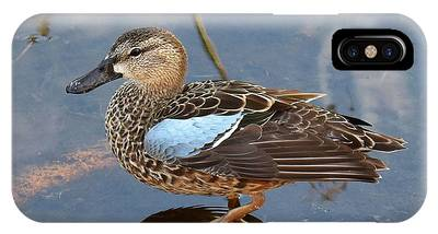 IPhone Case featuring the photograph I Really Am A Green Winged Teal by Sally Sperry