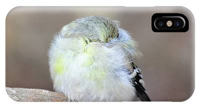 Little Sleeping Goldfinch IPhone Case