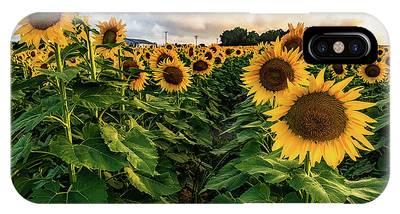 Long Island Sunflowers  IPhone Case