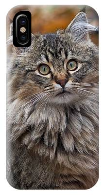 IPhone Case featuring the photograph Maine Coon Cat by Rona Black