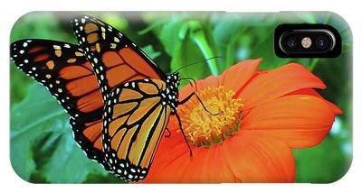 Monarch On Mexican Sunflower IPhone Case