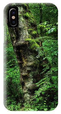 IPhone Case featuring the photograph Moody Tree In Forest by Dennis Dame