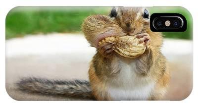 Squirrels Phone Cases
