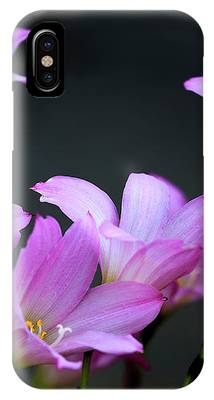 Pink Fairy Lilies IPhone Case by Richard J Thompson