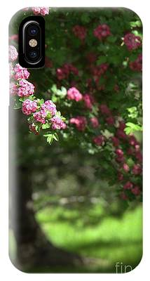 Pink Orchard Blossoms IPhone Case by Patricia Strand